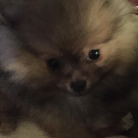 3 Monate  - (Hund, süß)