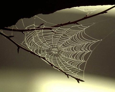 Spinnweben Unter Dem Dachgebälk Nachbar Findet Das Nicht So Toll Natur Nachbarn