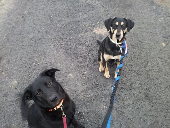 LILLY (links) und CHARLIE (rechts) sehr lieb, gehorsam und aufmerksam - (Schule, Hund, gassi)