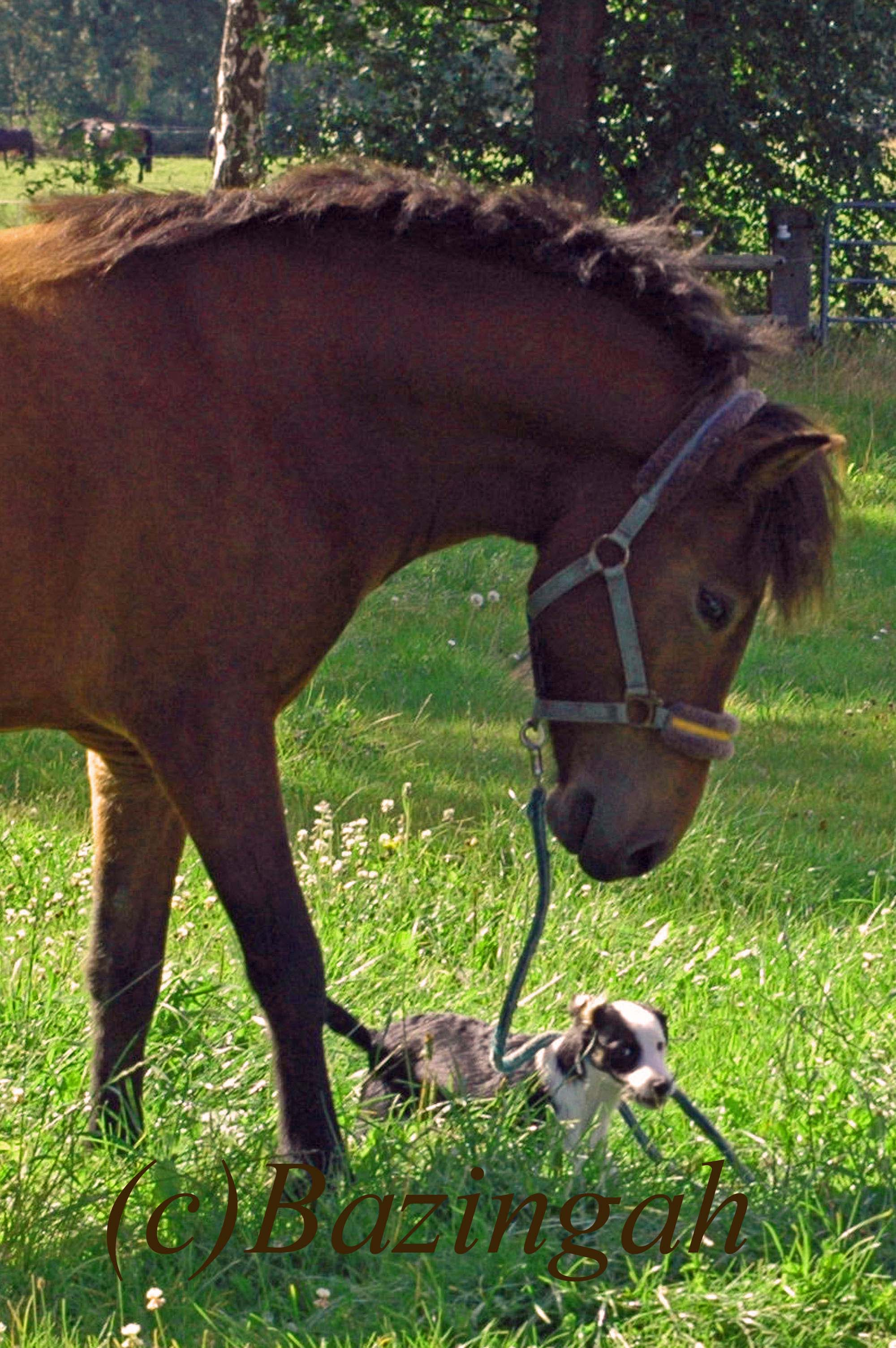 hund und pferd zusammenbringen pferde zusammenführung
