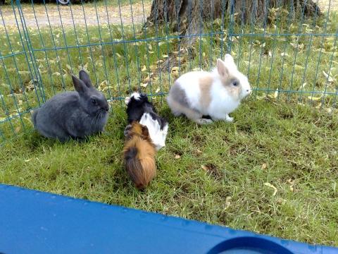 Bilduntertitel eingeben... - (Tiere, Haustiere, Kaninchen)