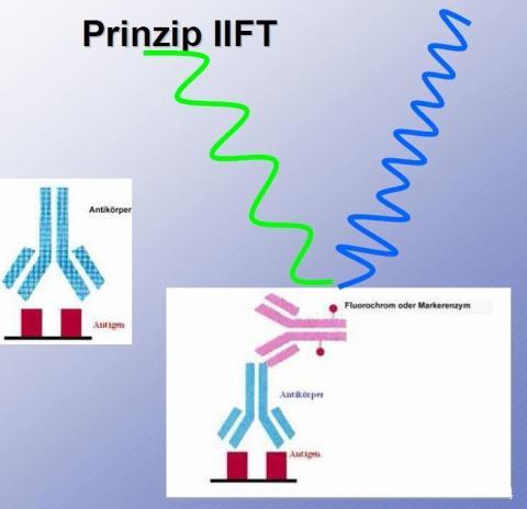 Das ist das Funktionsprinzip, also warum es fluoresziert - (Schule, Referat)