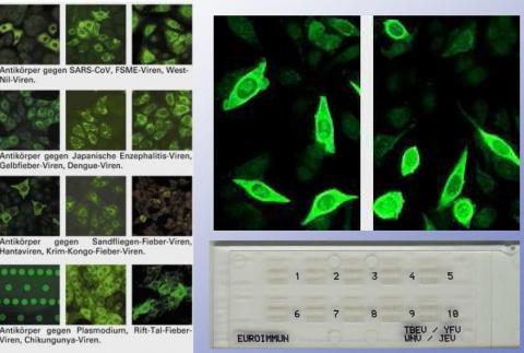 Hier ein paar Beispielbilder aus meinem Labor - (Schule, Referat)