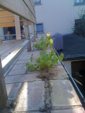 ohne Profil am Randbereich - (Hausbau, Balkonsanierung)