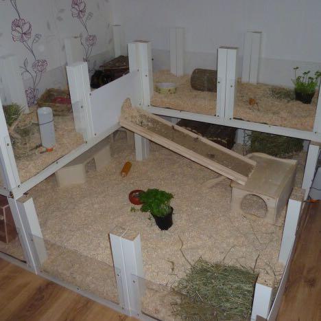 meerschweinchen und kaninchen in einem k fig tiere haustiere hasen. Black Bedroom Furniture Sets. Home Design Ideas