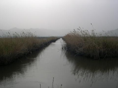 Pego Reisfelder. - (Verhalten, Spanien, begrüßung)