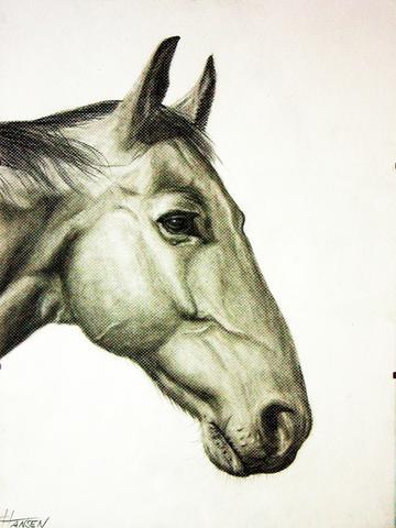 Wie Zeichne Ich Schattierungen Besonders Bei Tieren Pferden