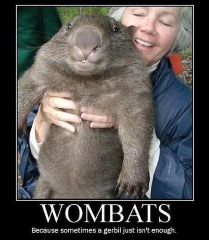Wombat - (Liebe, Freunde, Partnerschaft)