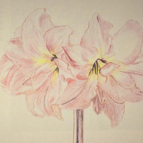 Wie Zeichnet Man Eine Blume Einfach Zeichnen Malen Blumen
