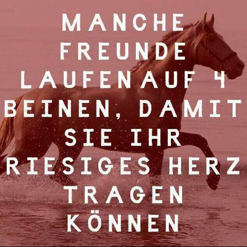 - (Pferde, Sprüche, Zitat)