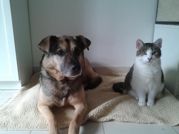 unsere andere Hündin und Katze - (Leben, Hund, Katze)