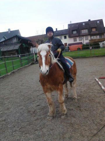 Seppl Haflinger, 29J, und Ich  - (Pferde, reiten)