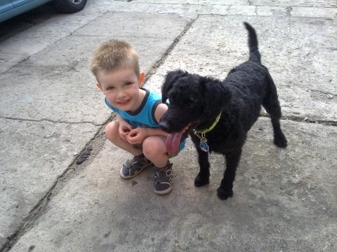 Der Kleine hatte Angst vor Hunder - (Tiere, Hund, Haltung)
