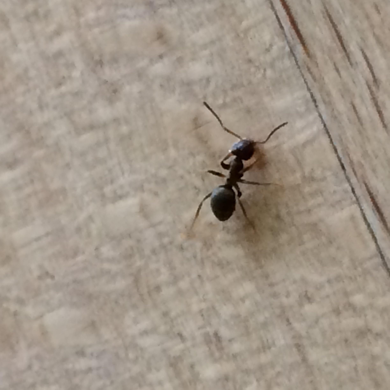 Kleine Ameisen Im Badezimmer - Wohndesign Ideen