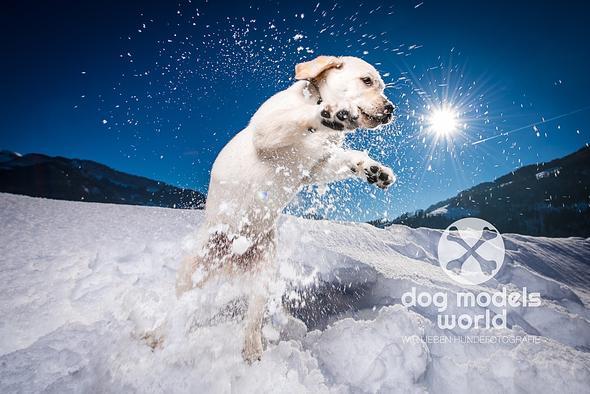 Hund in Action :-) - (Hund, Foto, Fotografie)