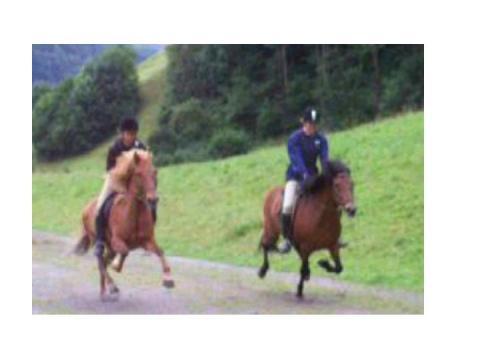 Isi-Power auf der Passbahn <3 - (Pferde, reiten, Rasse)