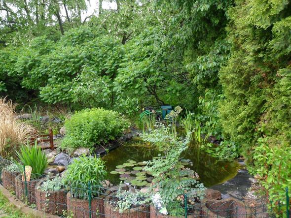 bereits erfahrungen mit einem schwimmteich pool wasserpflanzen. Black Bedroom Furniture Sets. Home Design Ideas