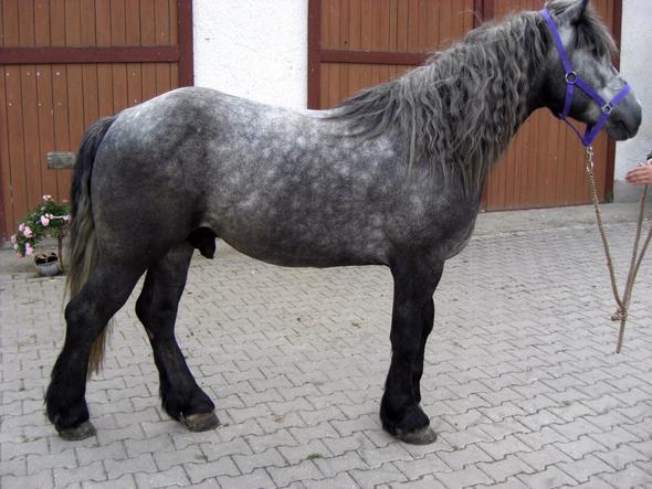 hallo allerseits schimmel kommen nicht als wei e fohlen zur welt wie sieht das bei pferden mit. Black Bedroom Furniture Sets. Home Design Ideas