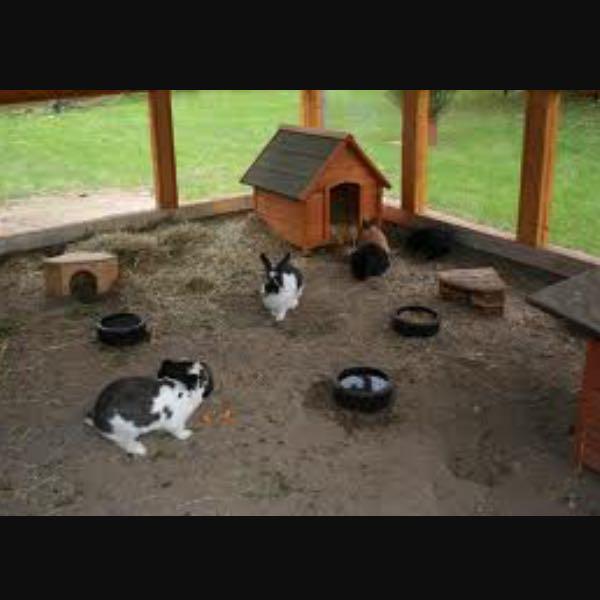 wie richte ich einen hasengehege richtig ein kaninchen. Black Bedroom Furniture Sets. Home Design Ideas