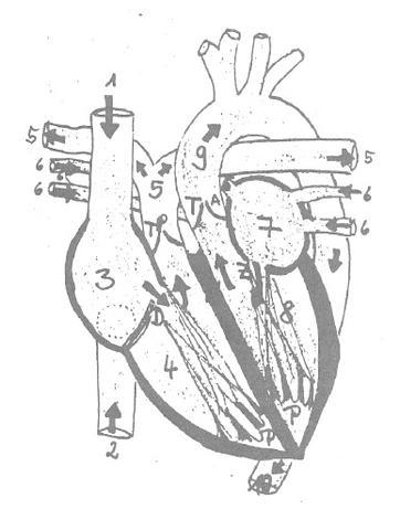 nur das Herz - (PC, Bilder, Informatik)