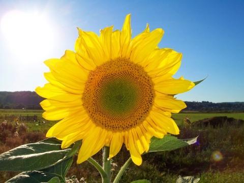 Sonne für dich! - (Freunde, Hass, Hoffnungslosigkeit)