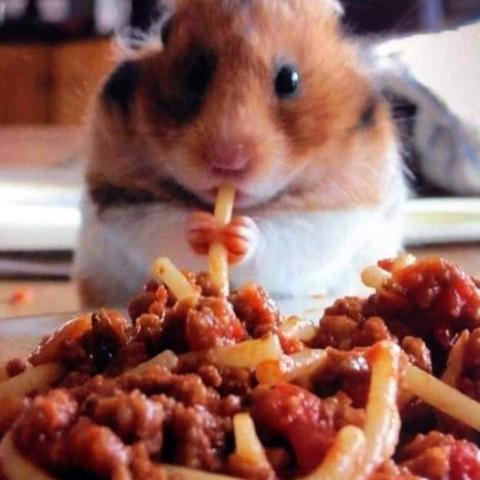 - (Tiere, Pflege, Hamster)
