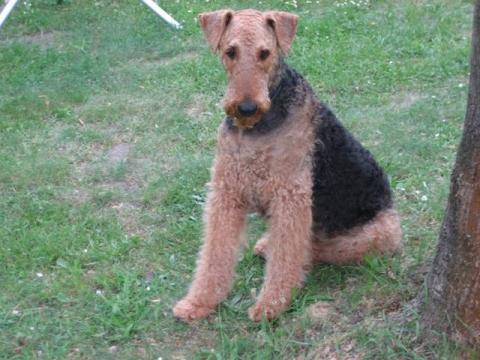 Lola auf dem Campingplatz  - (Hund, Hundehaltung, Familienhund)