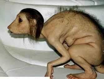 das Rattenmädchen - (Mädchen, Koran, Affen)