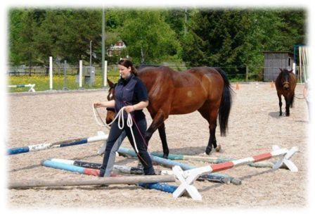 Ein beo - (Sport, Pferde)
