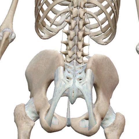 Ligamentum Supraspinale  - (Gesundheit, steissbein)