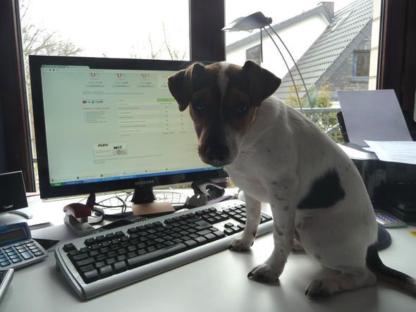 - (Hund, spielen, Zunge)
