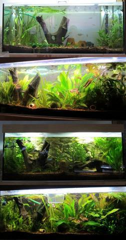 wie lange kann ein aquarium ohne wasserwechsel auskommen urlaub. Black Bedroom Furniture Sets. Home Design Ideas