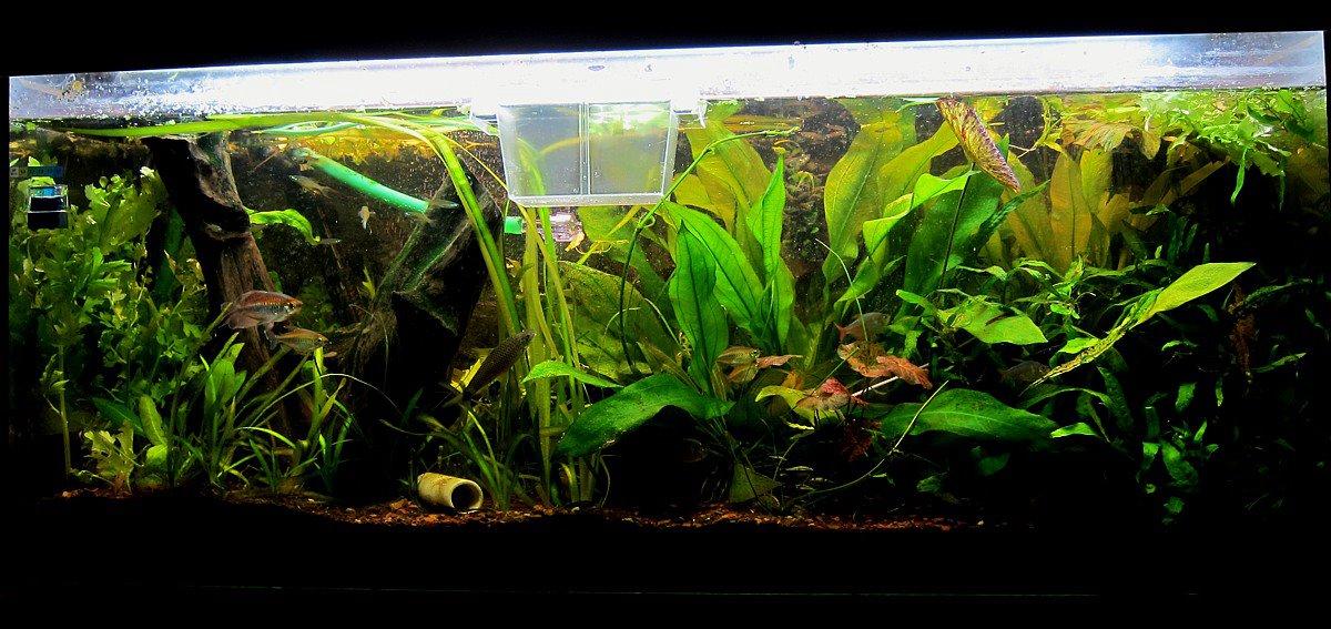 Wie lange kann ein aquarium ohne wasserwechsel auskommen for Aquarium wasserwechsel
