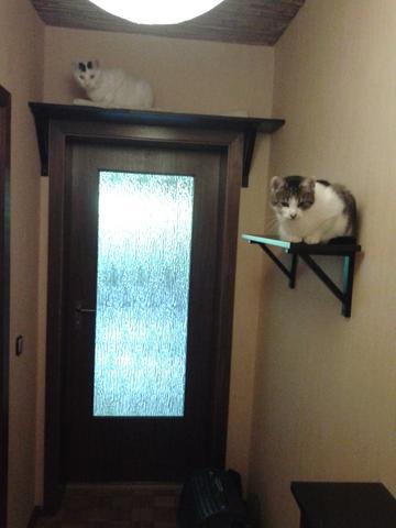 - (Katzen, bauen, Catwalk)