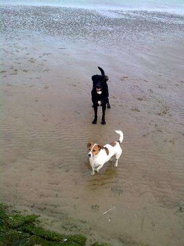 Kalle & Merle ♥♥♥ - (Hund, Alter, Impfung)