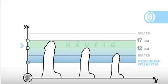 Wie groГџ ist der durchschnittliche Penis