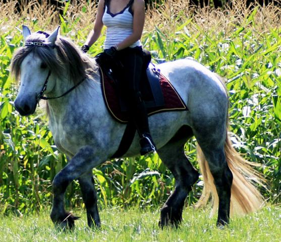 Schon deutlich besser bei mir, aber noch lange nicht perfekt - (Pferde, Reiten, Pony)