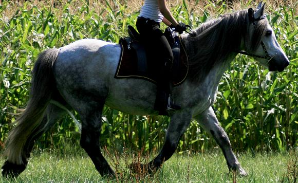 Mehr Schwung, ich dafür mit Hohlkreuz - (Pferde, Reiten, Pony)