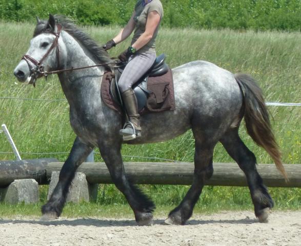 Grottig geritten bei der Vorbesitzerin - (Pferde, Reiten, Pony)
