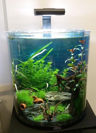 Wieso frisst kampffisch nicht mehr aquarium for Kampffisch aquarium