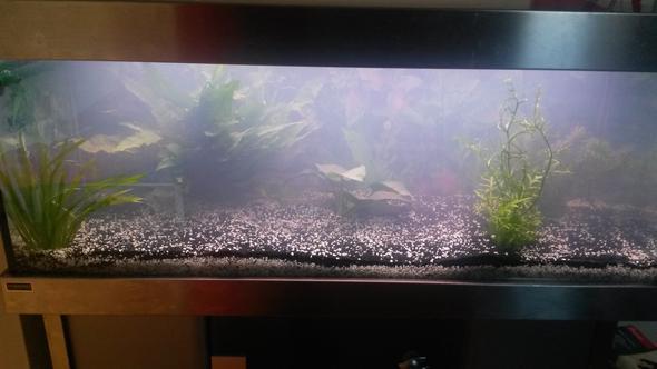 Das Aquarium als ganzes :) - (Aquarium, Aquaristik)