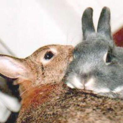 Glücklich - (Kaninchen, Vertrauen)