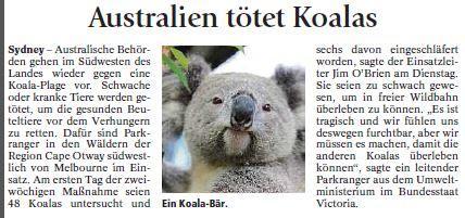 Koalas - (Englisch, Referat, Australien)