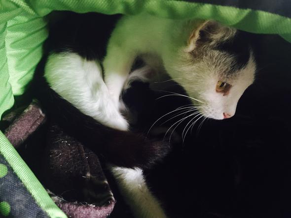 - (Katzen, Katzengeburt)