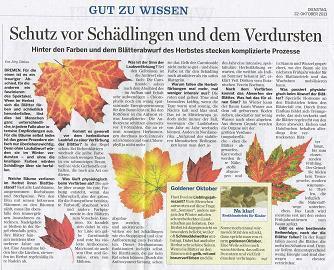 Herbst - (Biologie, Baum, Herbst)