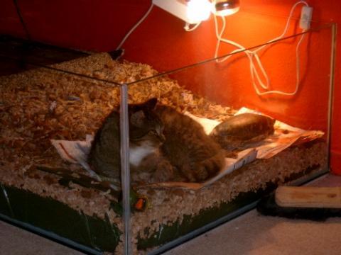 mein kater mit seinem kumpel - (Tiere, Katze, Haustiere)