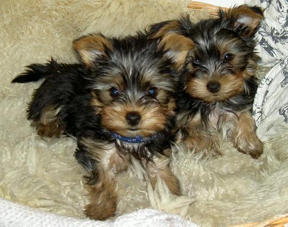 Happy & Rocky - (Hund, Namen)