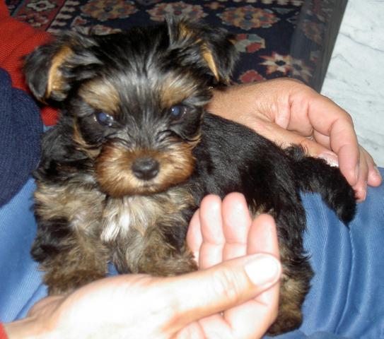 Timmy - (Hund, Namen)