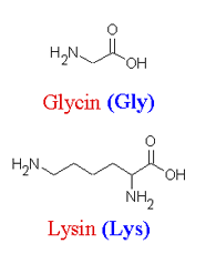 Glycin und Lysin - (Schule, Chemie, Aminosäuren)