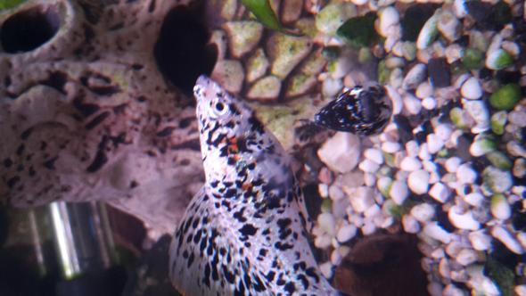 nochmal von nahen  - (Krankheit, Fische, Aquarium)